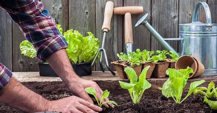 Социално фермерство